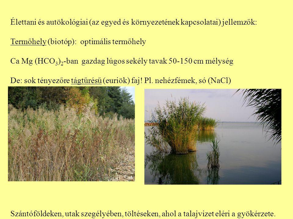 Élettani és autökológiai (az egyed és környezetének kapcsolatai) jellemzők: Termőhely (biotóp): optimális termőhely Ca Mg (HCO 3 ) 2 -ban gazdag lúgos sekély tavak 50-150 cm mélység De: sok tényezőre tágtűrésű (euriök) faj.