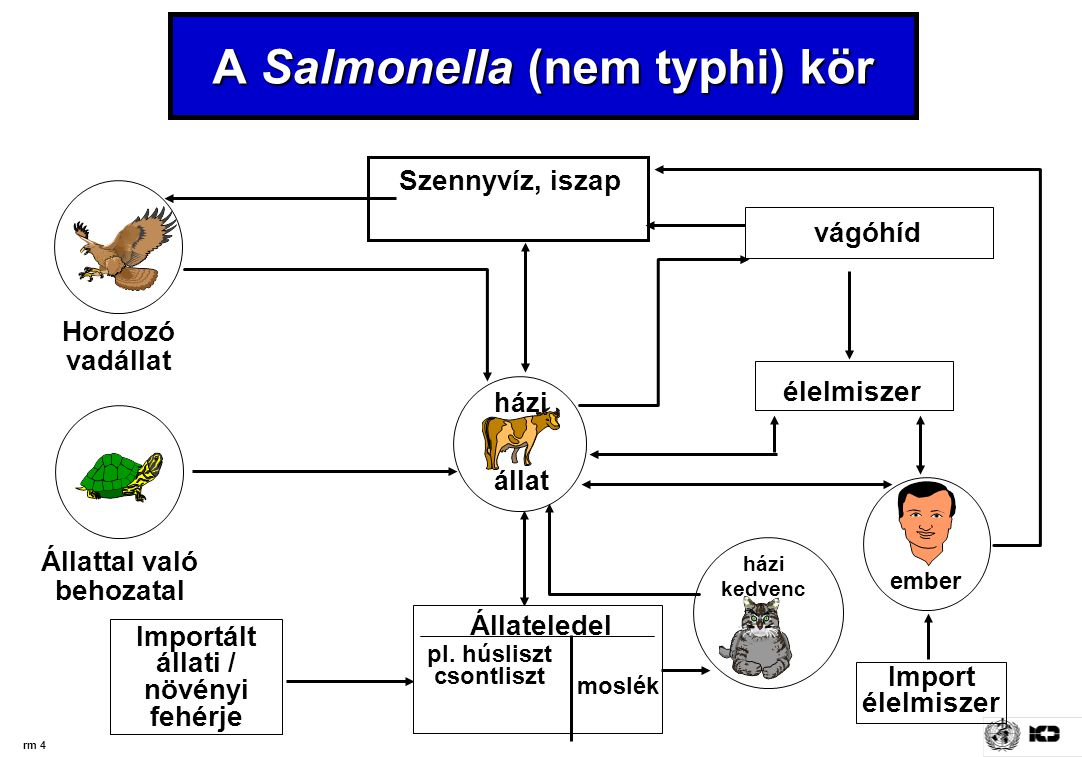 rm 4 A Salmonella (nem typhi) kör Szennyvíz, iszap Importált állati / növényi fehérje vágóhíd élelmiszer Hordozó vadállat Állattal való behozatal ember házi kedvenc házi állat Import élelmiszer Állateledel pl.