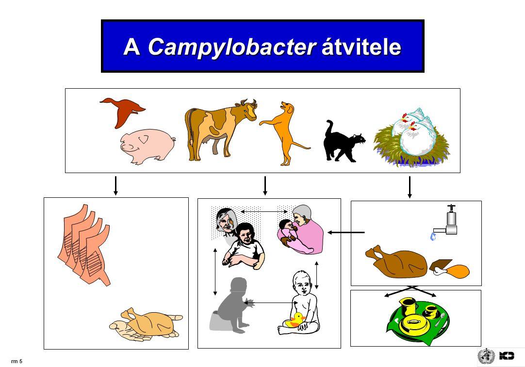 rm 5 A Campylobacter átvitele