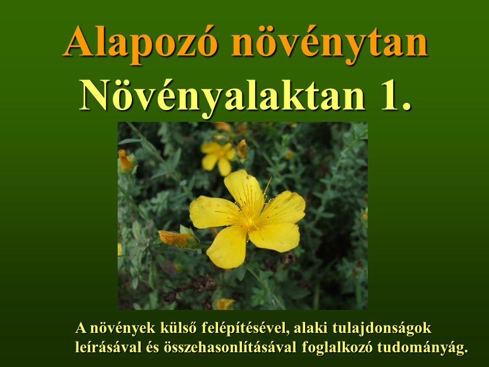 Alapozó növénytan Növényalaktan 1. A növények külső felépítésével, alaki tulajdonságok leírásával és összehasonlításával foglalkozó tudományág. leírás