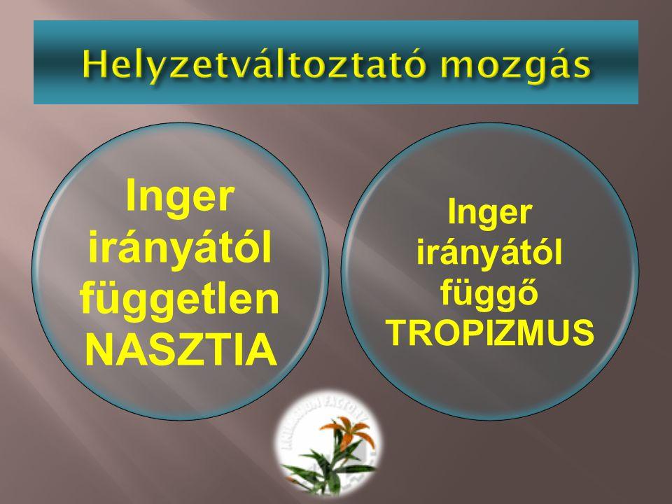 Inger irányától független NASZTIA Inger irányától függő TROPIZMUS