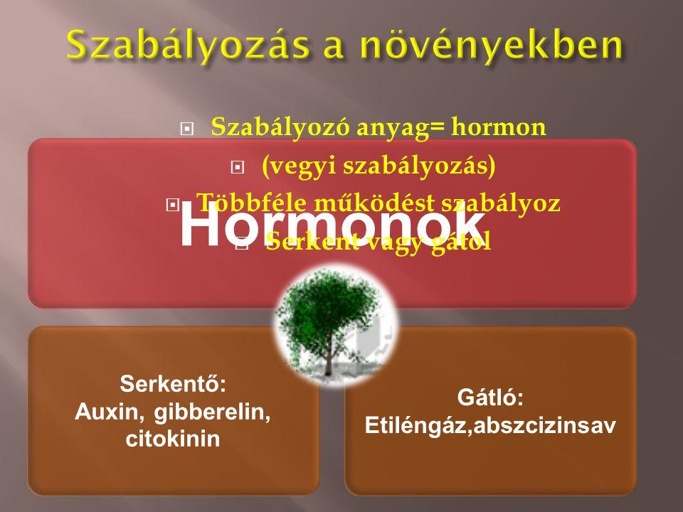 Hormonok Serkentő: Auxin, gibberelin, citokinin Gátló: Etiléngáz,abszcizinsav  Szabályozó anyag= hormon  (vegyi szabályozás)  Többféle működést sza