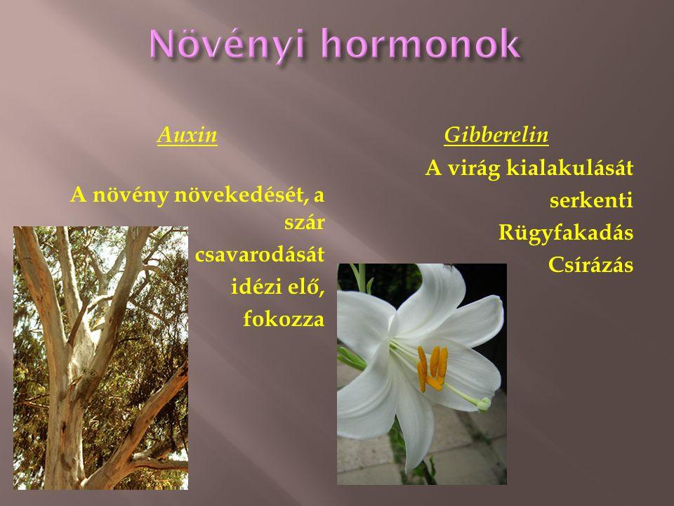 Auxin A növény növekedését, a szár csavarodását idézi elő, fokozza Gibberelin A virág kialakulását serkenti Rügyfakadás Csírázás