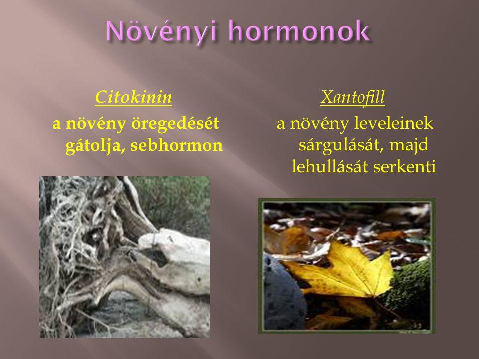 Citokinin a növény öregedését gátolja, sebhormon Xantofill a növény leveleinek sárgulását, majd lehullását serkenti