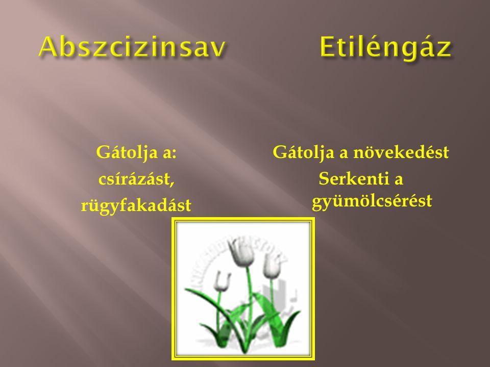 Gátolja a: csírázást, rügyfakadást Gátolja a növekedést Serkenti a gyümölcsérést