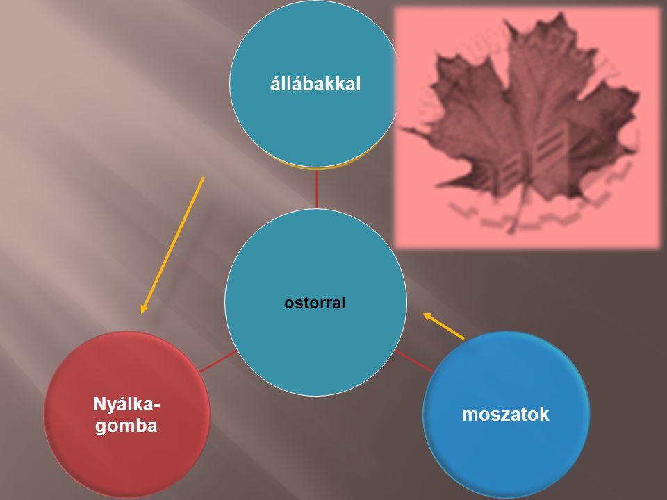 Aktív külső hely- változtató mozgás prokariótákmoszatok Nyálka- gomba állábakkal ostorral