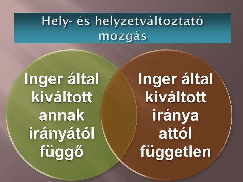 Inger által kiváltott annak irányától függő Inger által kiváltott iránya attól független