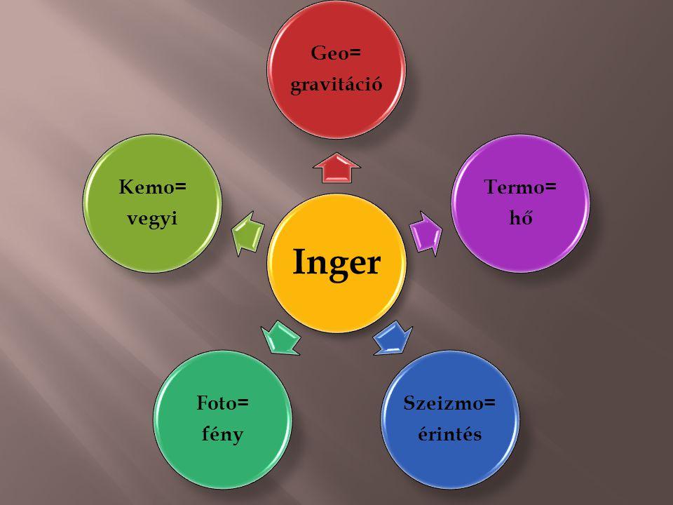 Inger Geo= gravitáció Termo= hő Szeizmo= érintés Foto= fény Kemo= vegyi