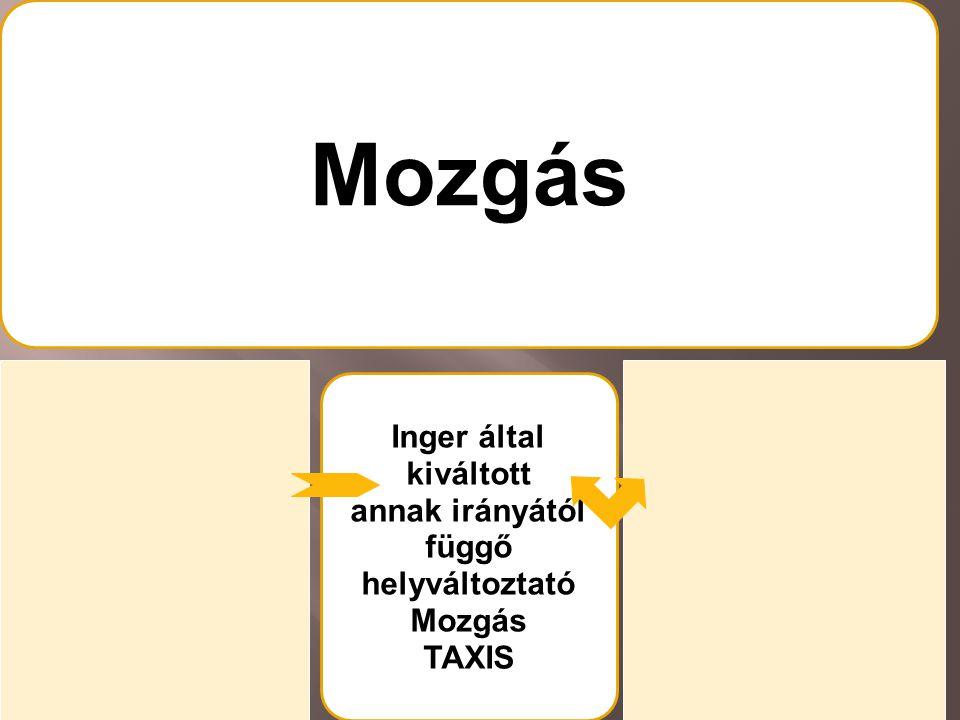 Mozgás Inger által kiváltott/ annak irányától függő helyzetváltoztató Mozgás TROPIZMUS Inger által kiváltott annak irányától függő helyváltoztató Mozgás TAXIS Inger által kiváltott attól független irányú helyzetváltoztató Mozgás NASZTIA