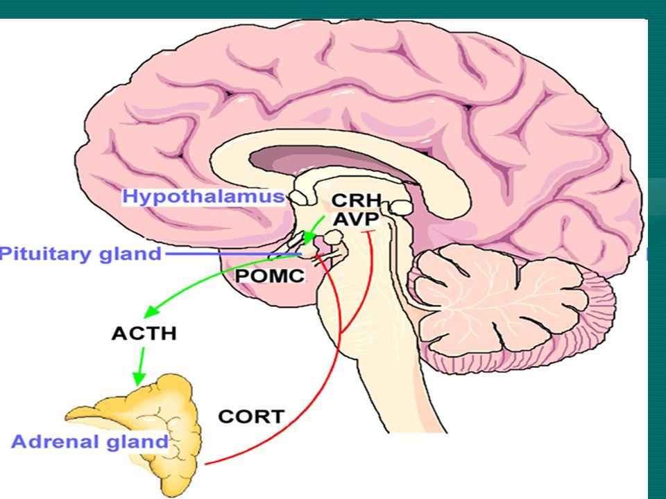 """Genetika, Gén-környezet interakciók – stresszes életesemények betegségkeltő hatása összefügg a szerotonin (5HTT) genetikai polimorfizmussal (a rövid, stressz érzékeny allél) gyakorisága /Kendler (2004) Am.J.Psych/– stresszes életesemények betegségkeltő hatása összefügg a szerotonin (5HTT) genetikai polimorfizmussal (a rövid, stressz érzékeny allél) gyakorisága /Kendler (2004) Am.J.Psych/ - stresszel kapcsolatos """"negativ affektivitás a - szemelyeségtenyező - szerepe a depressziv mentális betegségben amit szintén szerotonin (5HTT) genetikai polimorfizmus befolyásol /Jacobs, Van Os (2006, Arch Gen Psych) /- stresszel kapcsolatos """"negativ affektivitás a - szemelyeségtenyező - szerepe a depressziv mentális betegségben amit szintén szerotonin (5HTT) genetikai polimorfizmus befolyásol /Jacobs, Van Os (2006, Arch Gen Psych) /"""