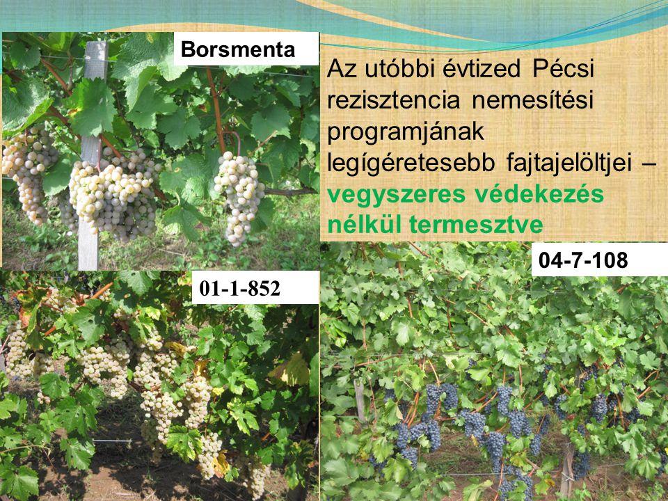 01-1-852 Borsmenta 04-7-108 Az utóbbi évtized Pécsi rezisztencia nemesítési programjának legígéretesebb fajtajelöltjei – vegyszeres védekezés nélkül t