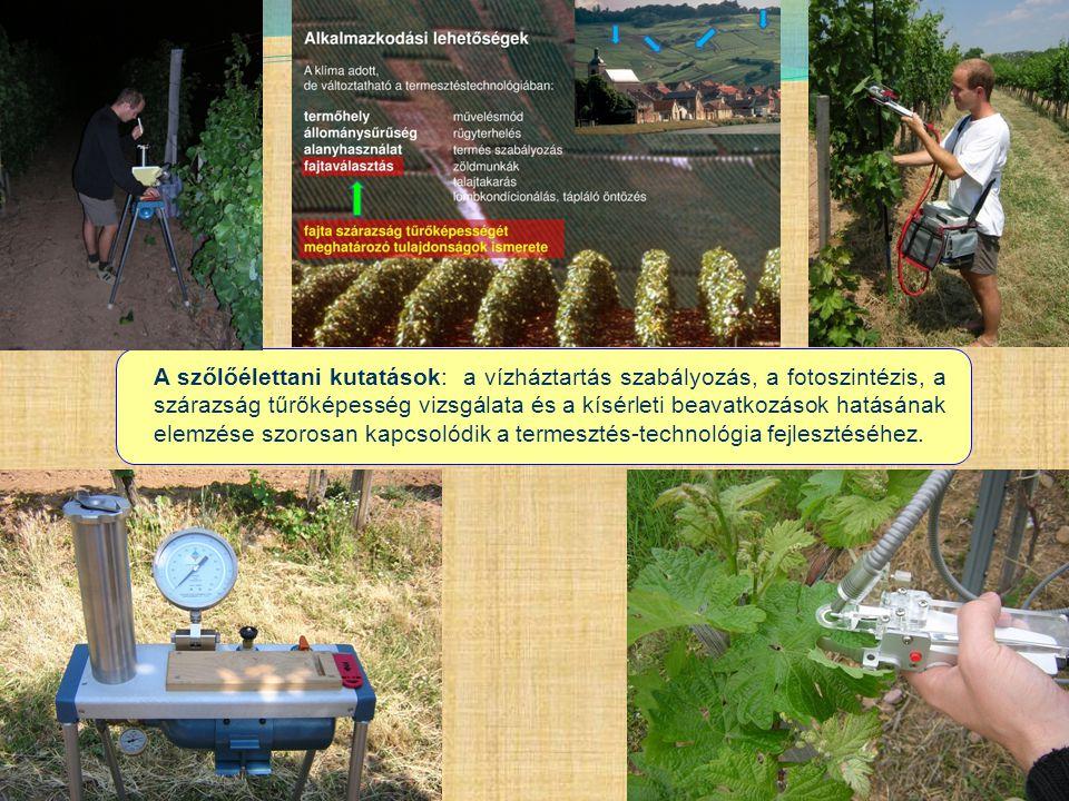A szőlőélettani kutatások: a vízháztartás szabályozás, a fotoszintézis, a szárazság tűrőképesség vizsgálata és a kísérleti beavatkozások hatásának ele