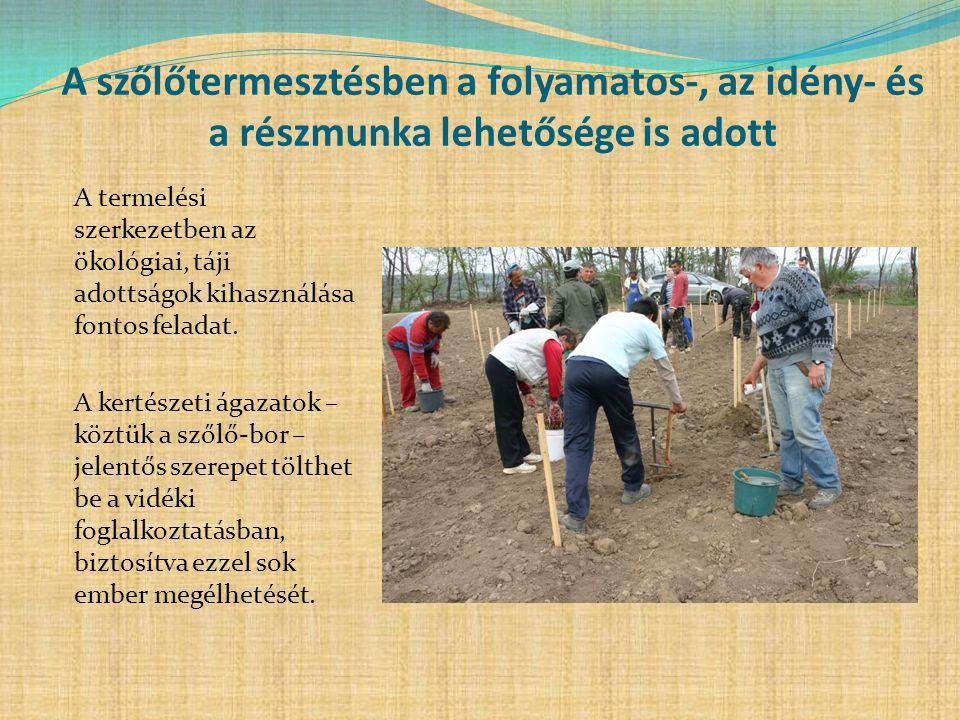 A szőlőtermesztésben a folyamatos-, az idény- és a részmunka lehetősége is adott A termelési szerkezetben az ökológiai, táji adottságok kihasználása f