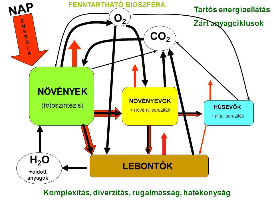 NAP NÖVÉNYEK (fotoszintézis) NÖVÉNYEVŐK + növényi paraziták HÚSEVŐK + állati paraziták LEBONTÓK H 2 O +oldott anyagok CO 2 O2O2 ENERGIAENERGIA Tartós energiaellátás Zárt anyagciklusok Komplexitás, diverzitás, rugalmasság, hatékonyság FENNTARTHATÓ BIOSZFÉRA