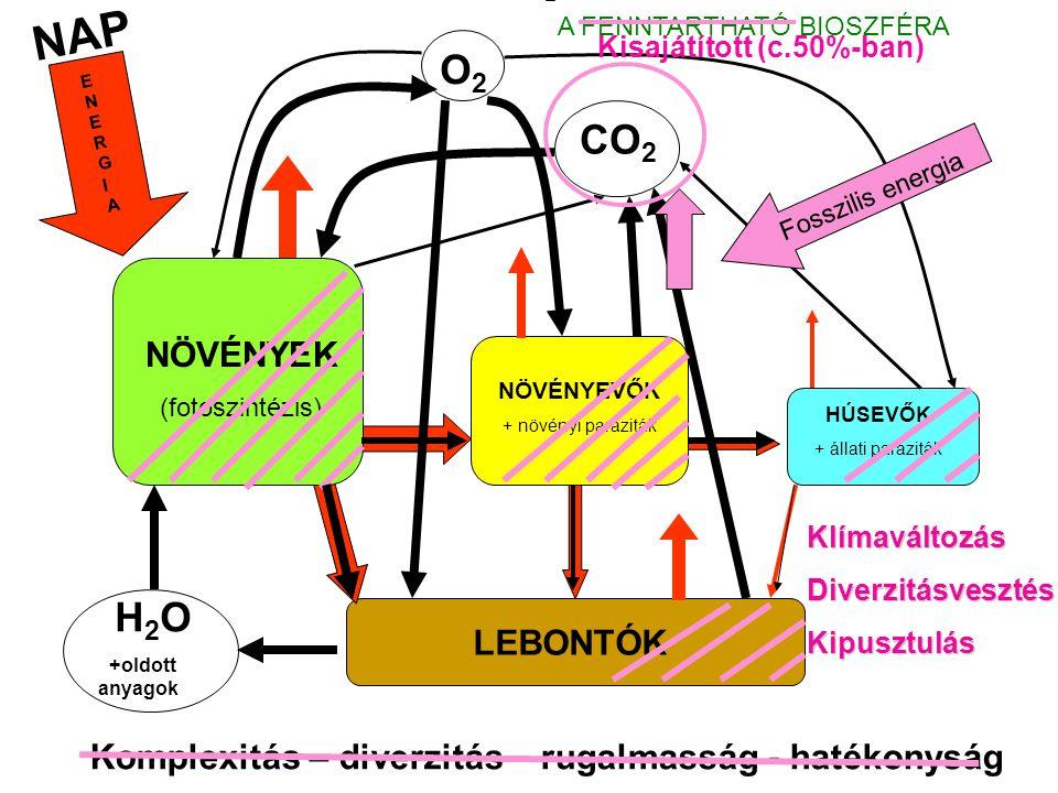NAP NÖVÉNYEK (fotoszintézis) NÖVÉNYEVŐK + növényi paraziták HÚSEVŐK + állati paraziták LEBONTÓK H 2 O +oldott anyagok CO 2 O2O2 ENERGIAENERGIA Komplexitás – diverzitás – rugalmasság - hatékonyság A FENNTARTHATÓ BIOSZFÉRA Fosszilis energia KlímaváltozásDiverzitásvesztésKipusztulás Kisajátított (c.50%-ban)