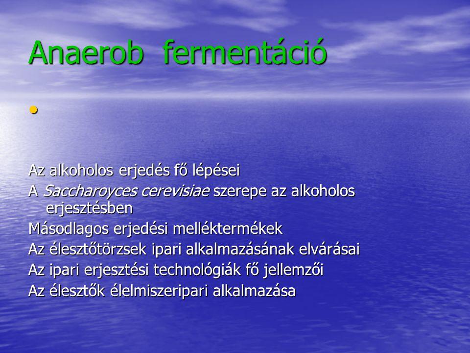 Anaerob fermentáció Az alkoholos erjedés fő lépései A Saccharoyces cerevisiae szerepe az alkoholos erjesztésben Másodlagos erjedési melléktermékek Az