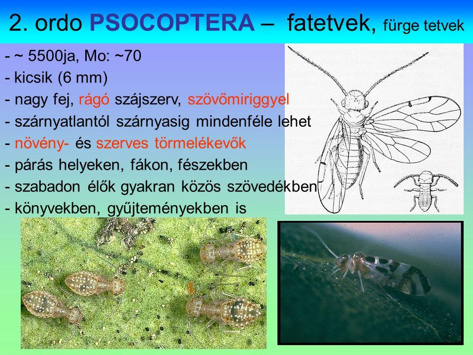 − 1.pár szárny: félfedő (hemielythrum) − Bőrszerű része a corium, hártyás a membrana.