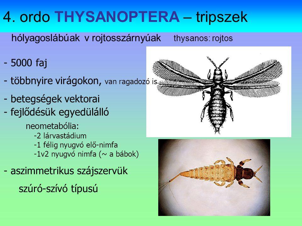 Familia: Lygaeidae - Bodobácsok Hosszúkás-ovális test, előhátuk trapéz alakú.