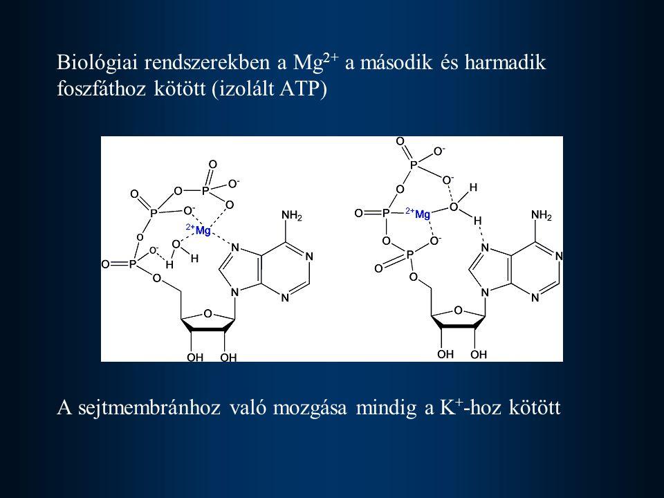 Biológiai rendszerekben a Mg 2+ a második és harmadik foszfáthoz kötött (izolált ATP) A sejtmembránhoz való mozgása mindig a K + -hoz kötött