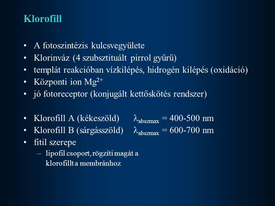 Klorofill A fotoszintézis kulcsvegyülete Klorinváz (4 szubsztituált pirrol gyűrű) templát reakcióban vízkilépés, hidrogén kilépés (oxidáció) Központi