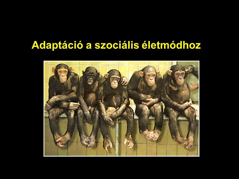 Adaptáció a szociális életmódhoz