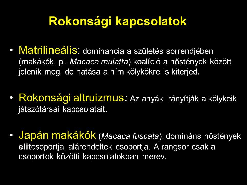 Rokonsági kapcsolatok Matrilineális: dominancia a születés sorrendjében (makákók, pl. Macaca mulatta) koalíció a nőstények között jelenik meg, de hatá