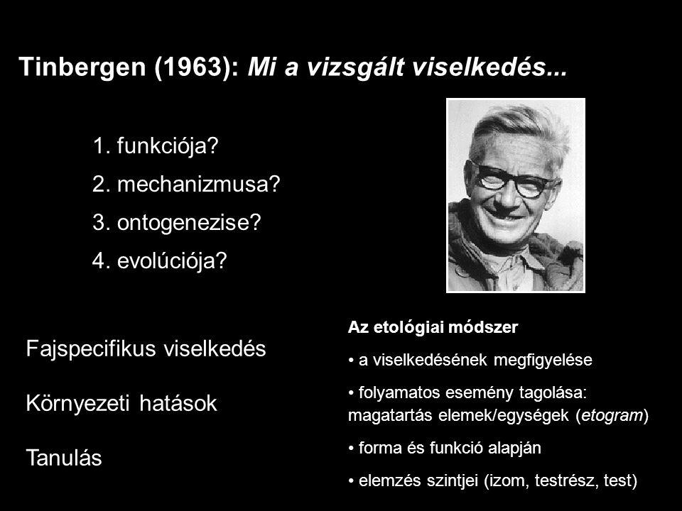 1. funkciója? 2. mechanizmusa? 3. ontogenezise? 4. evolúciója? Tinbergen (1963): Mi a vizsgált viselkedés... Az etológiai módszer a viselkedésének meg