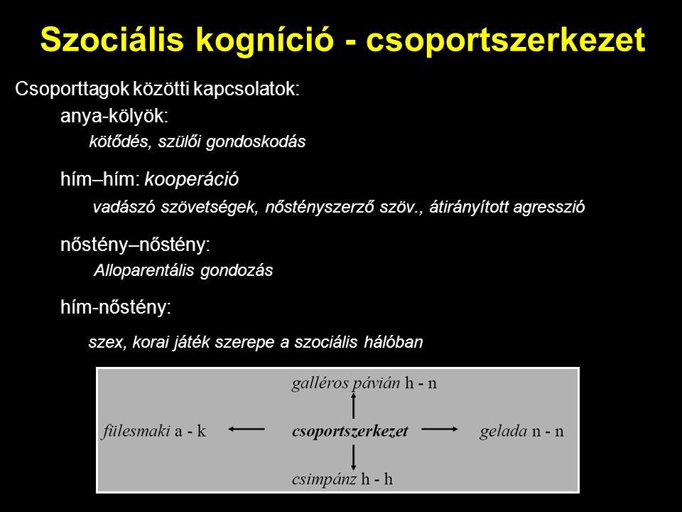 Szociális kogníció - csoportszerkezet Csoporttagok közötti kapcsolatok: anya-kölyök: kötődés, szülői gondoskodás hím–hím: kooperáció vadászó szövetség