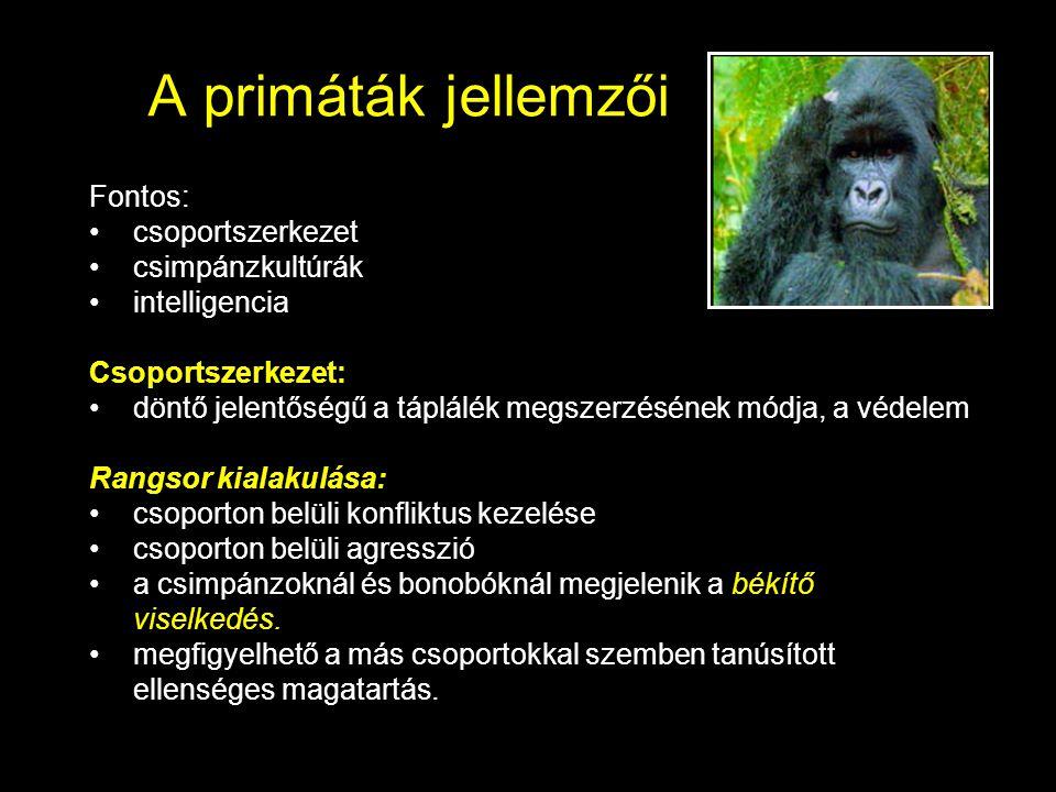 A primáták jellemzői Fontos: csoportszerkezet csimpánzkultúrák intelligencia Csoportszerkezet: döntő jelentőségű a táplálék megszerzésének módja, a vé