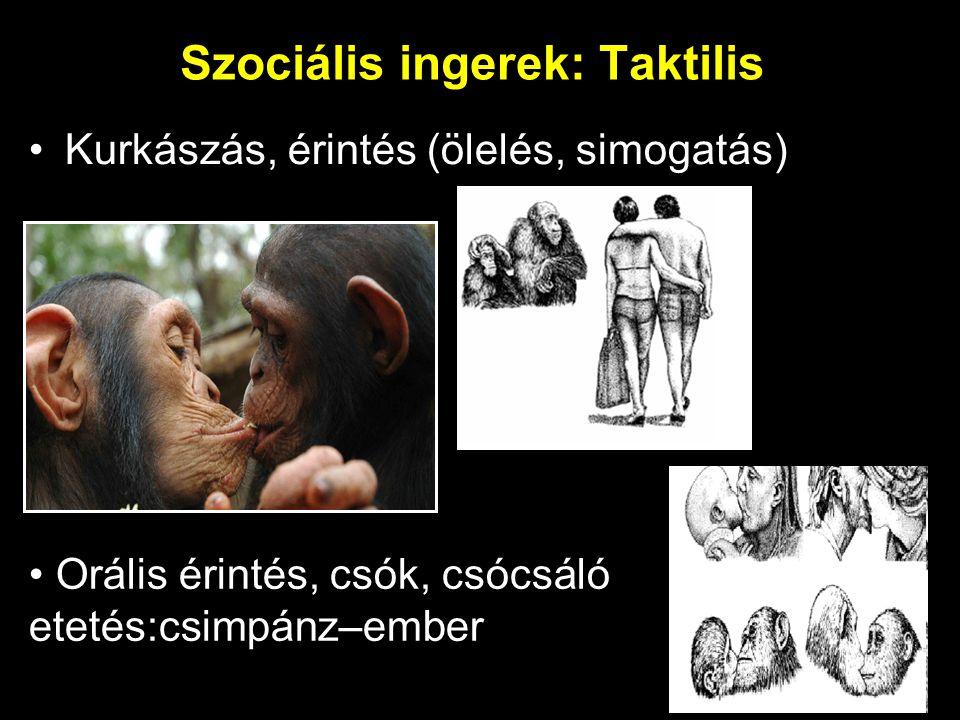 Szociális ingerek: Taktilis Kurkászás, érintés (ölelés, simogatás) Orális érintés, csók, csócsáló etetés:csimpánz–ember