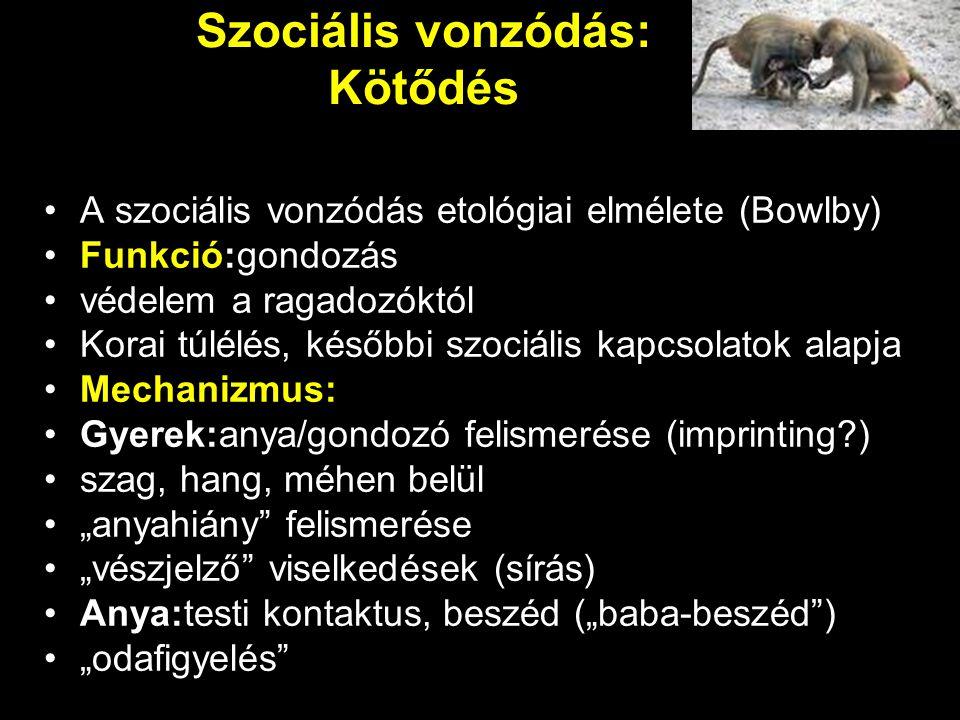 Szociális vonzódás: Kötődés A szociális vonzódás etológiai elmélete (Bowlby) Funkció:gondozás védelem a ragadozóktól Korai túlélés, későbbi szociális