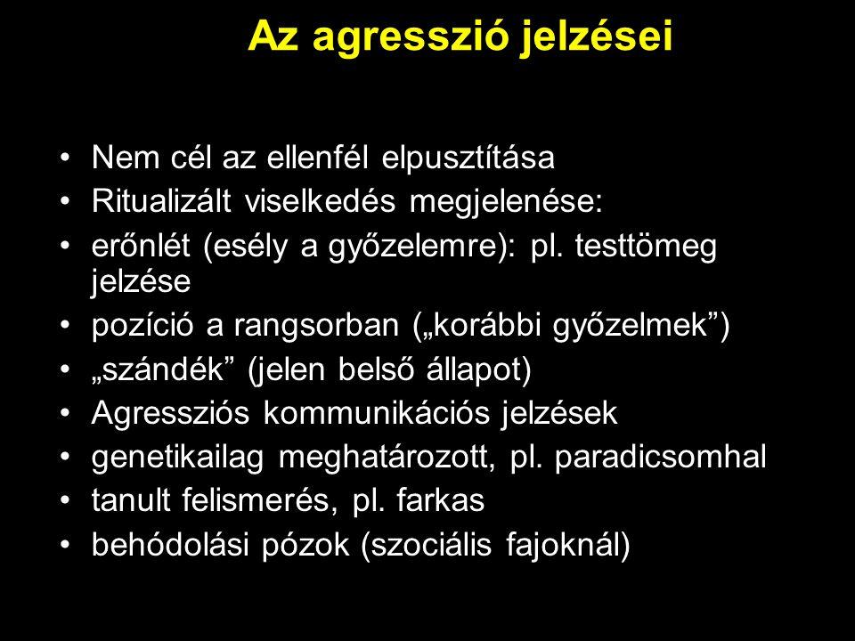 Az agresszió jelzései Nem cél az ellenfél elpusztítása Ritualizált viselkedés megjelenése: erőnlét (esély a győzelemre): pl. testtömeg jelzése pozíció