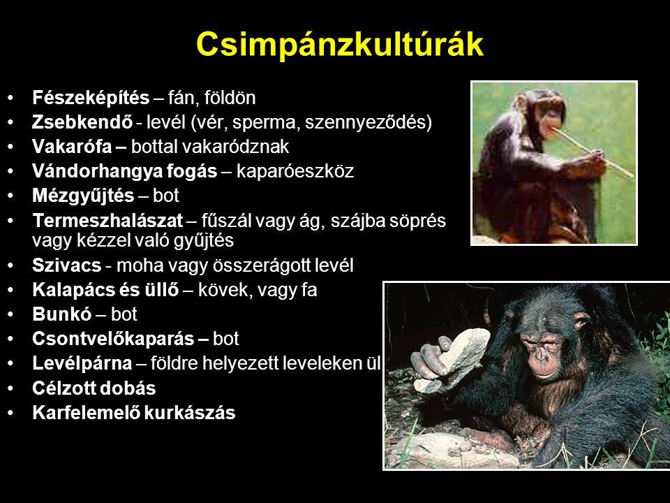 Csimpánzkultúrák Fészeképítés – fán, földön Zsebkendő - levél (vér, sperma, szennyeződés) Vakarófa – bottal vakaródznak Vándorhangya fogás – kaparóesz