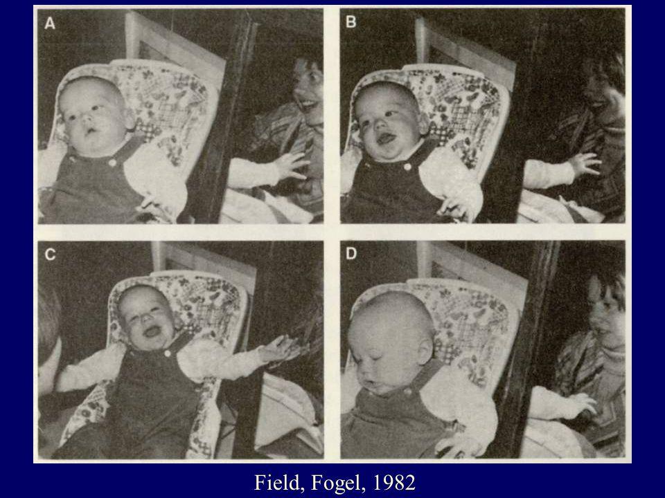 A kompetens csecsemő és Daniel Stern Szelf-érzet elmélete (Stern, 1985, Gabbard, 1994) Felbukkanó Szelf - érzet (0 - 2.