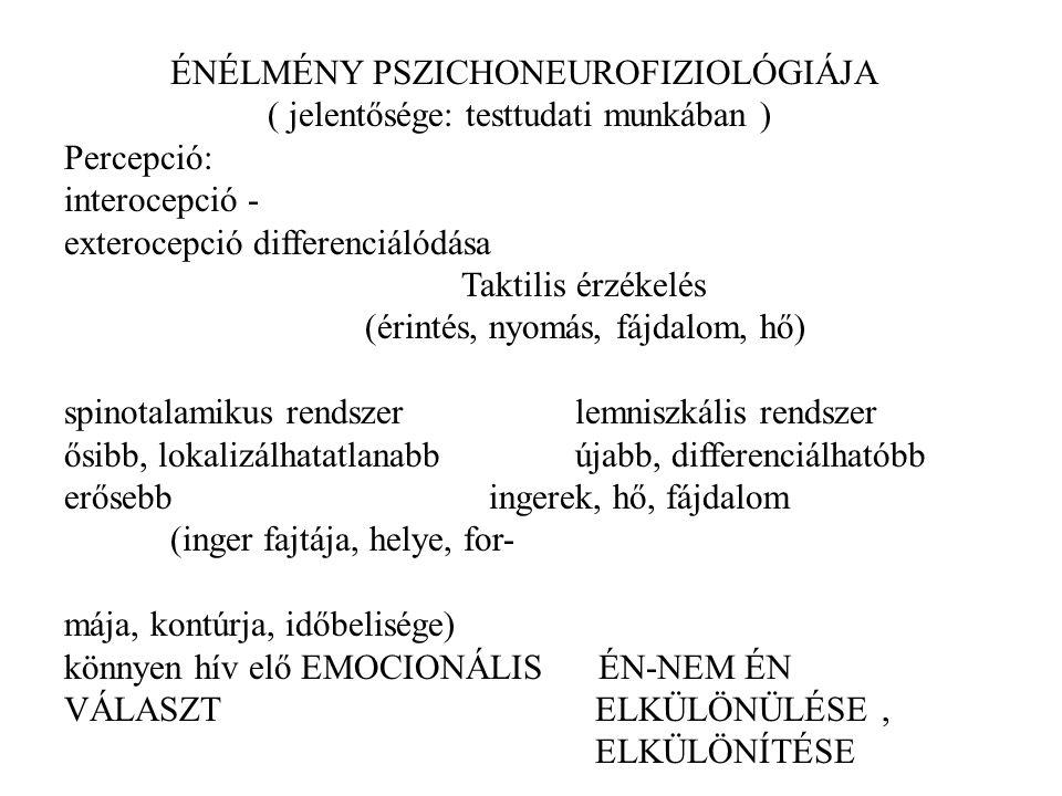 ÉNÉLMÉNY PSZICHONEUROFIZIOLÓGIÁJA ( jelentősége: testtudati munkában ) Percepció: interocepció - exterocepció differenciálódása Taktilis érzékelés (ér