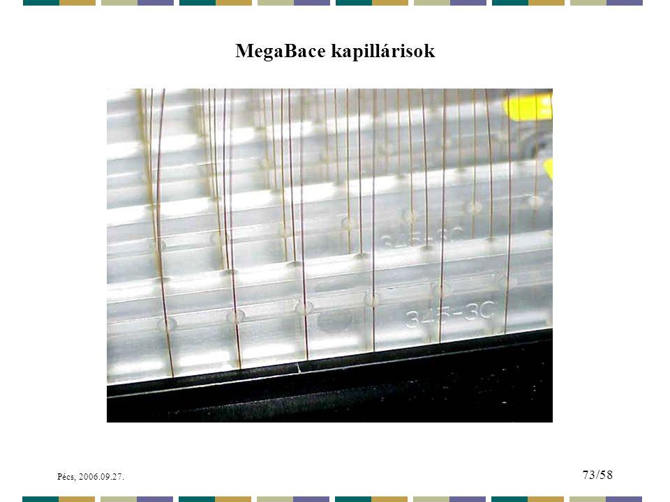 Pécs, 2006.09.27. 73/58 MegaBace kapillárisok