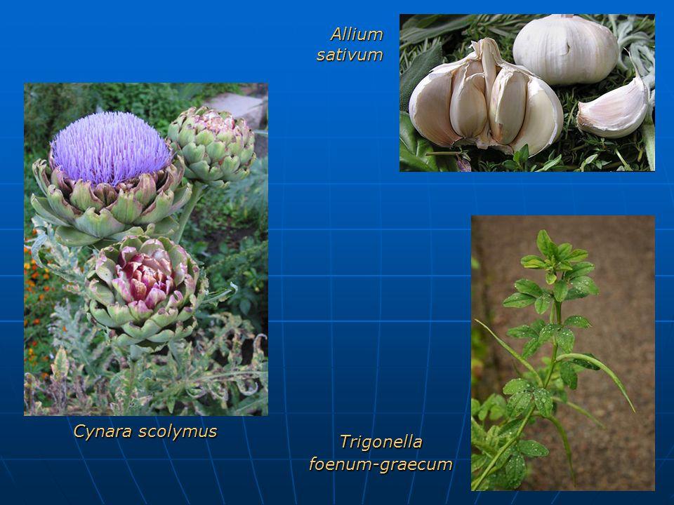 Cynara scolymus Trigonellafoenum-graecum Allium sativum