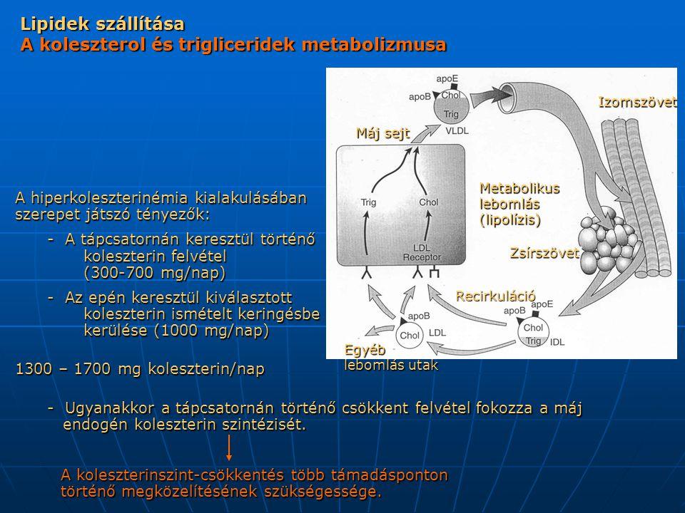 Lipidek szállítása A lipidanyagcsere befolyásolása gyógynövényekkel Máj sejt Metabolikus lebomlás (lipolízis) IzomszövetZsírszövet Recirkuláció Egyéb lebomlás utak Allium sativum (HDL) Allium sativum Cynara scolymus Allium sativum (HDL)