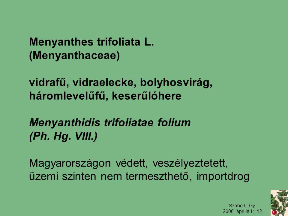 Szabó L. Gy. 2008. április 11-12. Menyanthes trifoliata L. (Menyanthaceae) vidrafű, vidraelecke, bolyhosvirág, háromlevelűfű, keserűlóhere Menyanthidi
