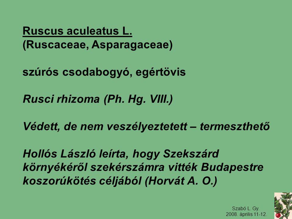 Szabó L. Gy. 2008. április 11-12. Ruscus aculeatus L. (Ruscaceae, Asparagaceae) szúrós csodabogyó, egértövis Rusci rhizoma (Ph. Hg. VIII.) Védett, de