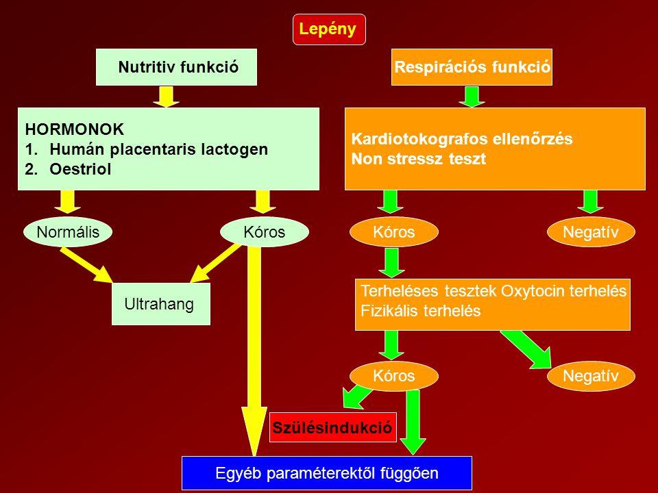 Lepény Nutritiv funkcióRespirációs funkció HORMONOK 1.Humán placentaris lactogen 2.Oestriol Kardiotokografos ellenőrzés Non stressz teszt NormálisKóro