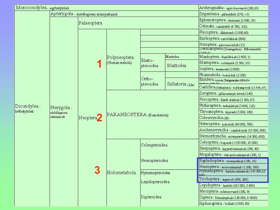 Padlásdarázs - Polistes nimpha Többnyire a tetőlécekre ragasztja széles alappal, egysejtsoros fészkét.