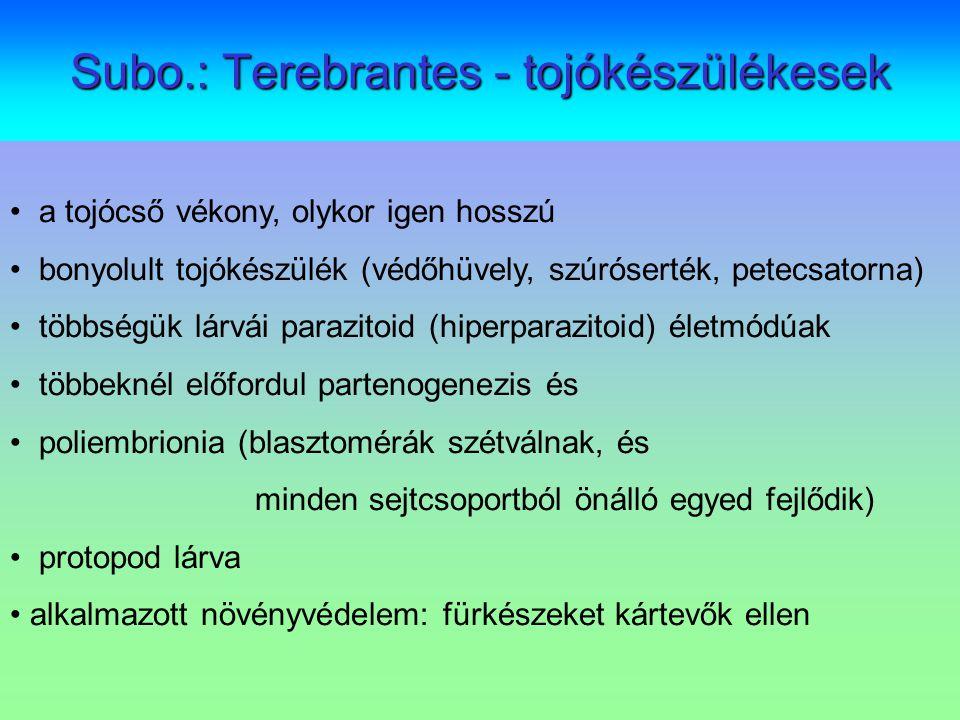 Subo.: Terebrantes - tojókészülékesek a tojócső vékony, olykor igen hosszú bonyolult tojókészülék (védőhüvely, szúróserték, petecsatorna) többségük lá