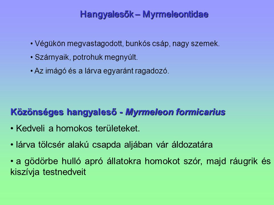 Hangyalesők – Myrmeleontidae Hangyalesők – Myrmeleontidae Végükön megvastagodott, bunkós csáp, nagy szemek. Szárnyaik, potrohuk megnyúlt. Az imágó és