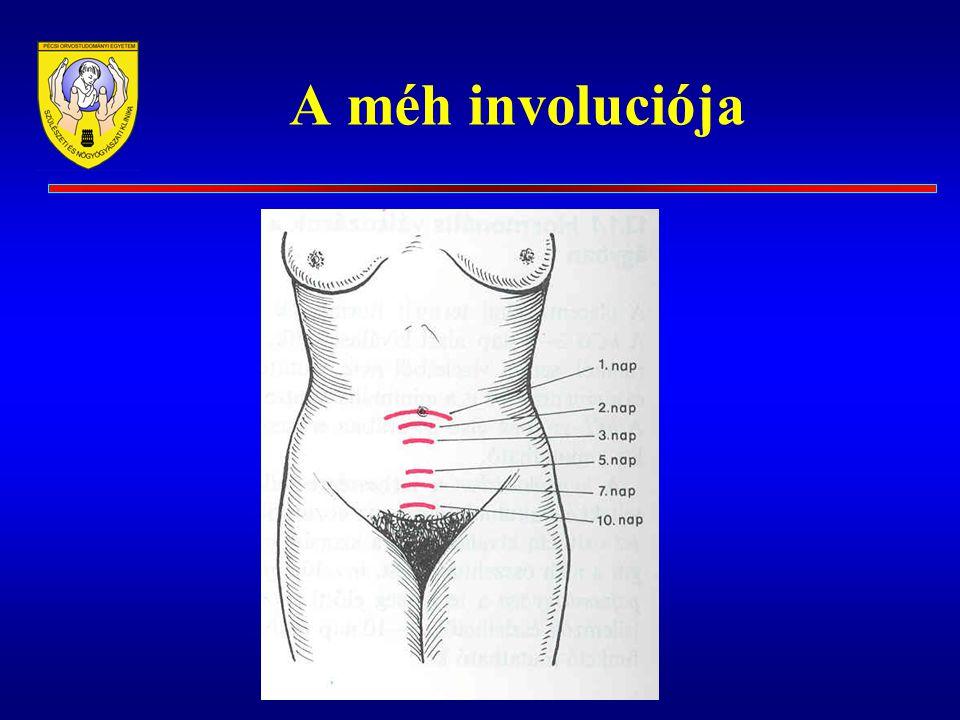 Involucio (extragenitalis) Urogenitalis rendszer Gastrointestinalis rendszer Haemopoeticus rendszer Haemodynamicai változások Egyéb változások Testsúly Hőmérséklet Bőr