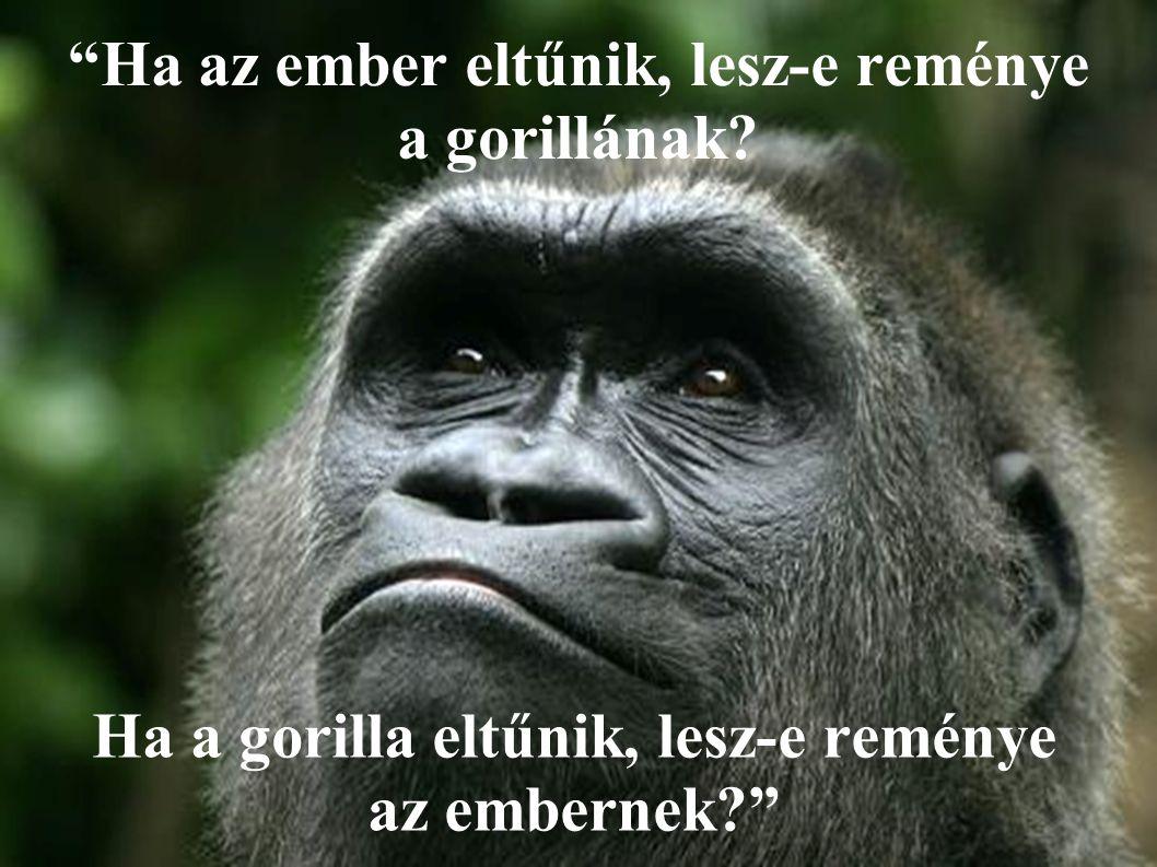 Ha az ember eltűnik, lesz-e reménye a gorillának.