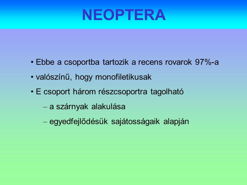 ordo NEOPTERA POLYNEOPTERA (Hemimetabola) Plecoptera - álkérészek (2 000,40) Embioptera -szövőlábúak (800) Notoptera - gleccsersáskák (13) Dermatoptera (Dermaptera) - fülbemászók (1500,6) Blattopteroidea MantodeaMantoptera - fogólábúak (1 800, 1) Blattodea Blattoptera - csótányok (3 500, 10) Isoptera - termeszek (2 000) Orthopteroidea Phasmatoda - botsáskák (2 500) Saltatoria (22e) Ensifera - tcsö-ek (Tettigonioidea:8500,43+ Gryllodea:2300,10) Caelifera (Orthoptera) - tojókampósok (11 000, 67) PARANEOPTERA (Eumetabola) Zoraptera - pillásszárnyú tetvek (140) HOLOMETABOLA ColeopteroideaColeoptera - bogarak (>350 000, 10 000) NeuropteroideaMegaloptera - vízi recésszárnyúak (200, 1) HymenopteroideaHymenoptera - hártyásszárnyúak (143 000,10 000) LepidopteroideaTrichoptera - tegzesek (600, 260) DipteroideaMecoptera- csőrösrovarok (500, 9) 1 2 3