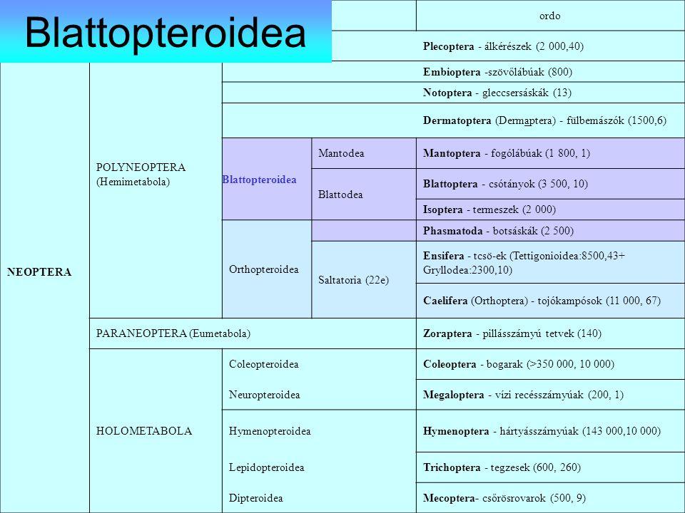 ordo NEOPTERA POLYNEOPTERA (Hemimetabola) Plecoptera - álkérészek (2 000,40) Embioptera -szövőlábúak (800) Notoptera - gleccsersáskák (13) Dermatopter