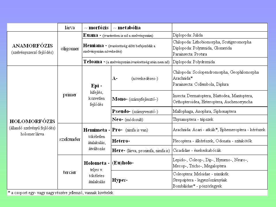 ordo: CAELIFERA - tojócsövesek Acridoidea - sáskák