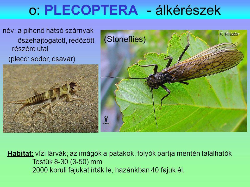 o: PLECOPTERA - álkérészek Habitat: vízi lárvák; az imágók a patakok, folyók partja mentén találhatók Testük 8-30 (3-50) mm. 2000 körüli fajukat írták